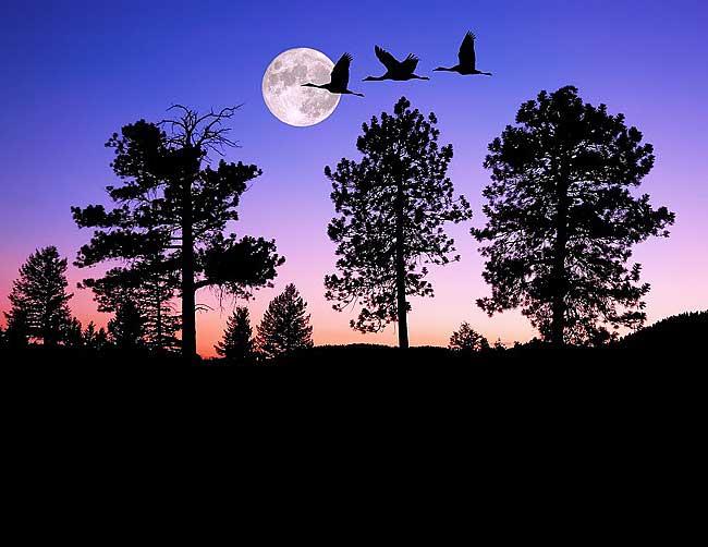 лунный камень магические свойства и фото