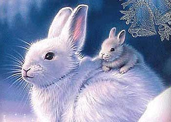 рожденные под знаком кролика