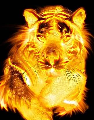 рожденные под знаком огненного тигра