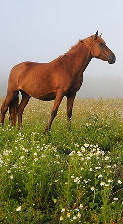 характеристика человека под знаком лошади