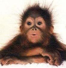 у мужчинах под знаком обезьяна