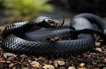 люди рождены под знаком змеи
