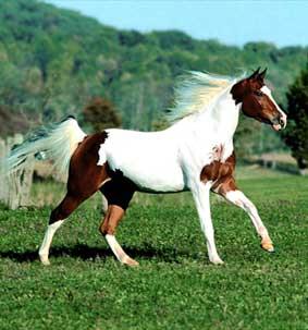 Знак земной лошади