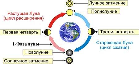 Первая фаза луны