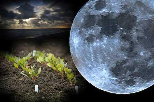 1 лунный день для огорода