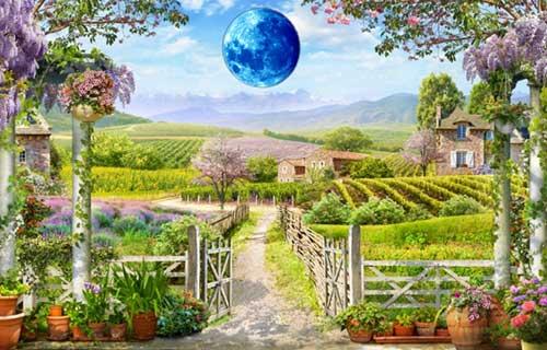 20 лунный день для огорода
