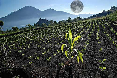 26 лунный день для огорода, сада
