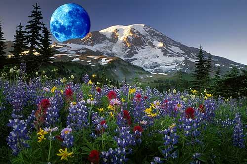 27 лунный день для огорода, сада