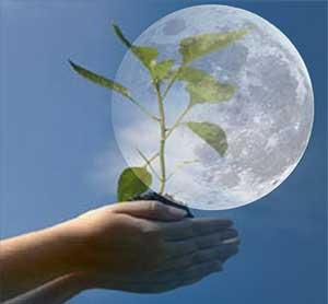 Можно ли сажать на убывающей луне? - Магия растений 18