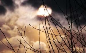 Растущая Луна и посев растений
