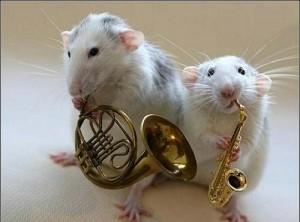 храктеристика крысы