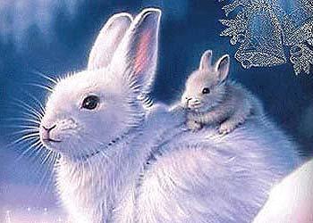 знак зодиака кролик