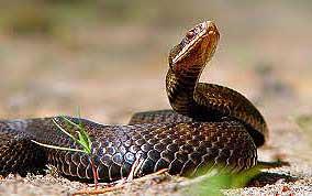 Знак земной Змеи