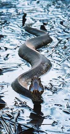 Знак водной Змеи