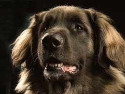Знак Земляной собаки