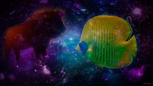 Лев и Рыбы - совместимость знаков