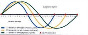 bioritm-cheloveka-geocult-2f