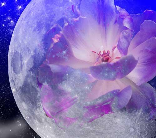 9 лунный день для огорода