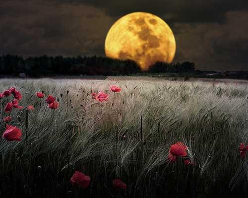 16 лунный день для огорода