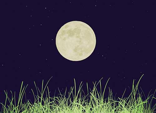 2 лунный день для огорода