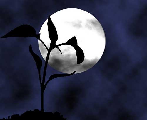 3 лунный день для огорода