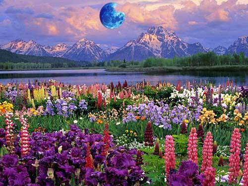 30 лунный день для огорода, сада и растений